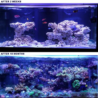 MarcoRocks Reef Saver Dry Live Rock
