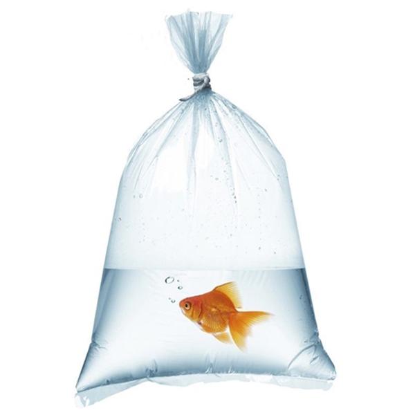 Fish Bags 10