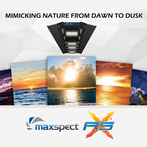 Maxspect Razor X 300w LED Lighting Fixture by Maxspect Mazarra]