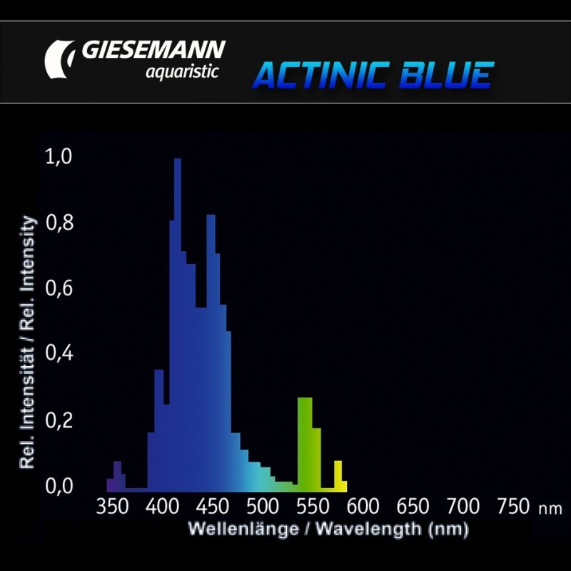 Giesemann 60