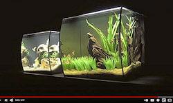 Fluval 9/15 gal. Aquariums